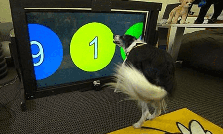 Large Tablet pc for dogs released